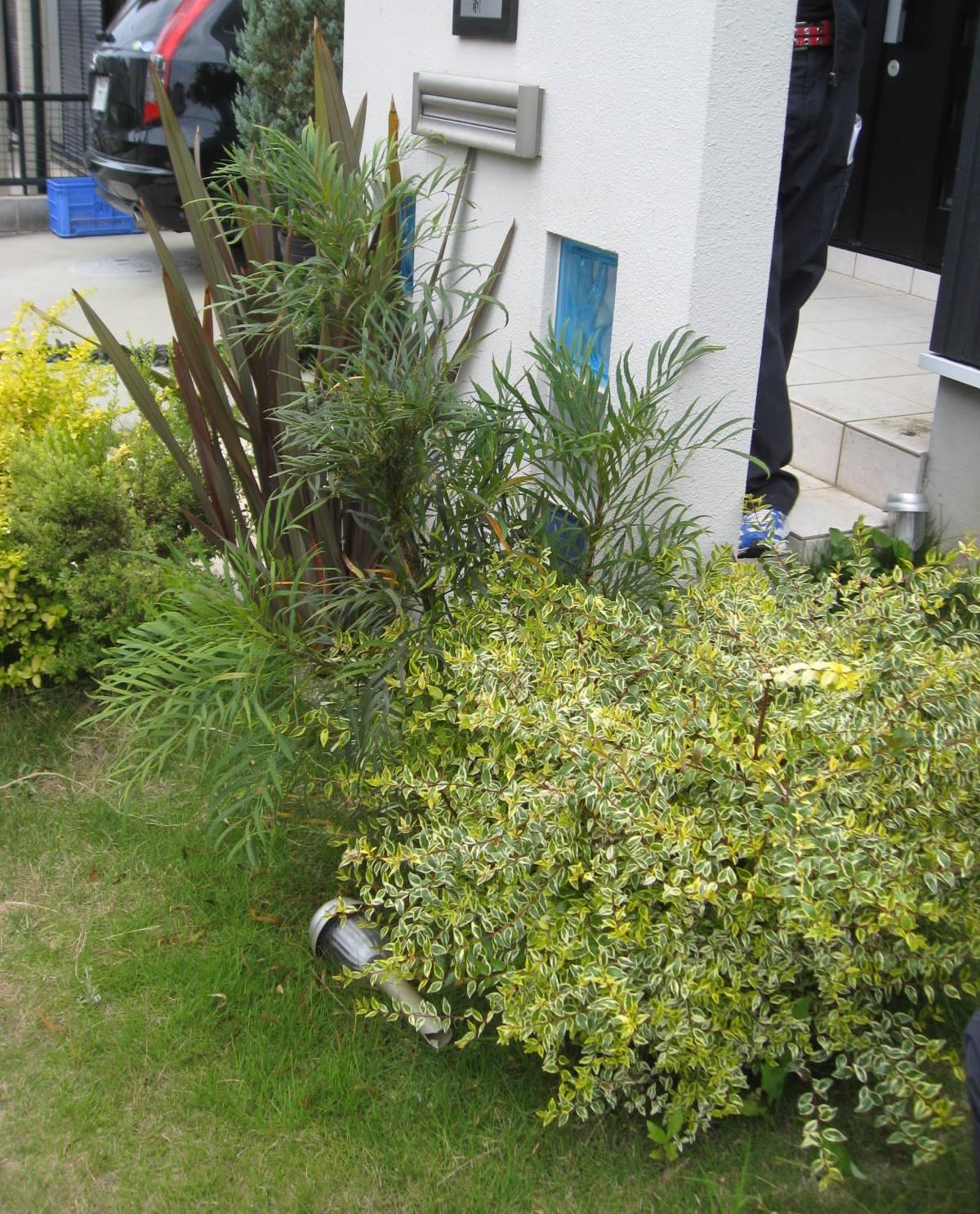 植栽例 ニューサイラン アベリア ホープレイズ