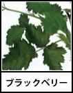 アイコン ブラックベリー