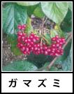 アイコン ガマズミ 落葉