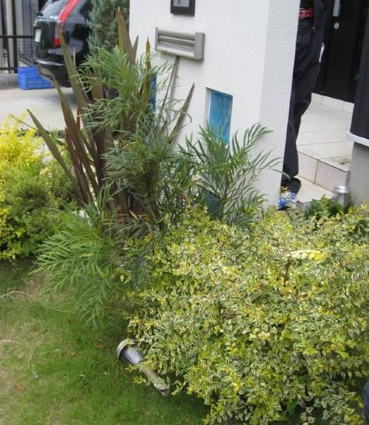 ホープレイズ 植栽例