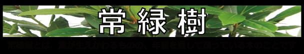 カテ 常緑樹 バナー