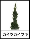 アイコン カイヅカイブキ