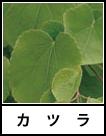 アイコン カツラ