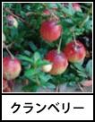 アイコン クランベリー
