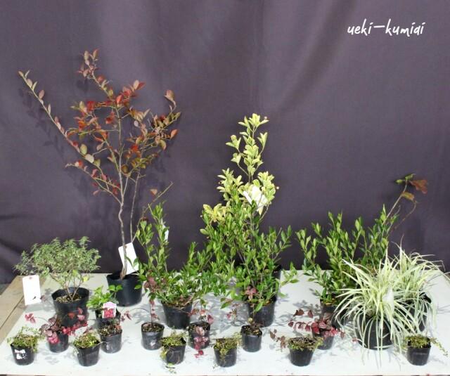 ガーデンセット ガーリー ナチュラル 植木組合オリジナル
