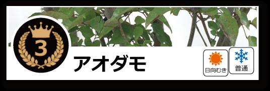 落葉ランキング アオダモ