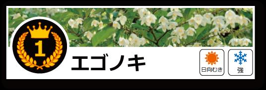 落葉ランキング エゴノキ