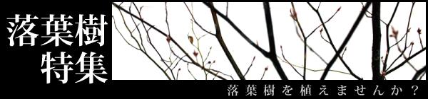 今月の特集 落葉樹