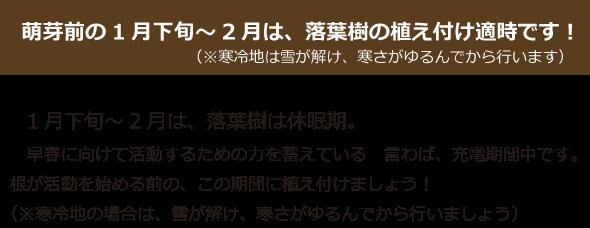 今月の特集~★落葉樹★~