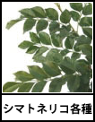 アイコン シマトネリコ