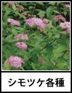 アイコン シモツケ