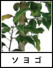 アイコン ソヨゴ