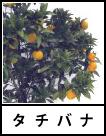 アイコン タチバナ