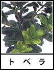 アイコン トベラ