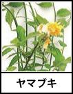 アイコン ヤマブキ