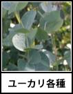 アイコン ユーカリ